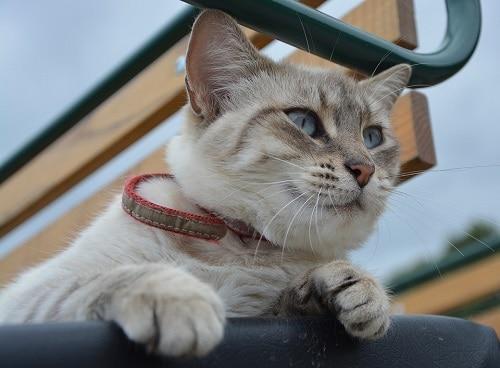 Animal Blue Eyes Feline Cat Eye Of Cat Legs