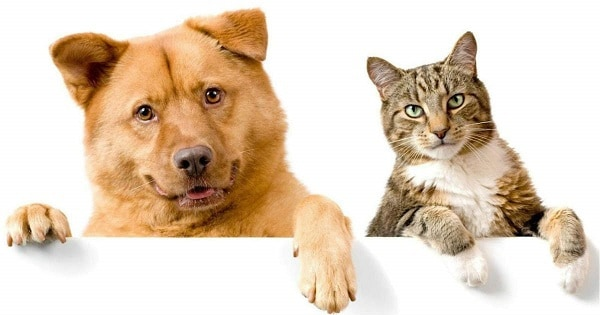 dog-and-cat-insurance