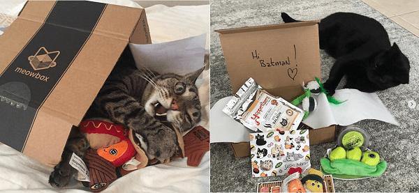meowbox-cat-subscription