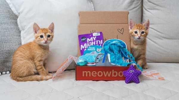 mewobox-cat-subscription-box