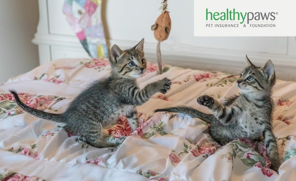 healthy paws pros cons
