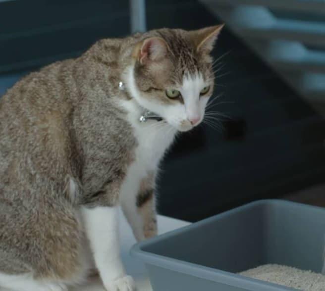 5 Best Dust Free Cat Litter Options
