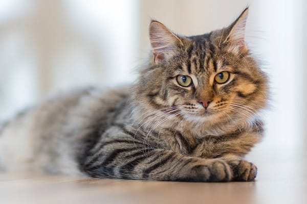 Fromm-Cat-Food