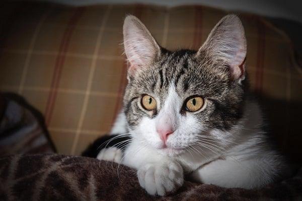 Orijen-Cat-Food-1