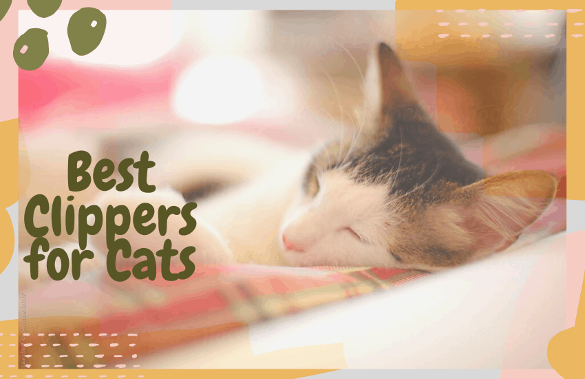 Best Clippers for Cats