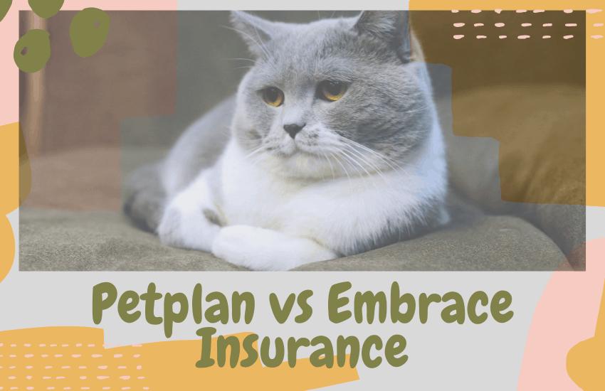 Petplan vs Embrace Insurance