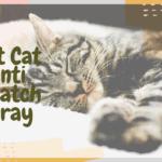 Best CatAnti Scratch Spray