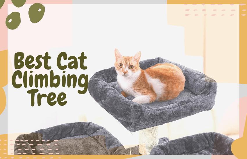 Best Cat Climbing Tree