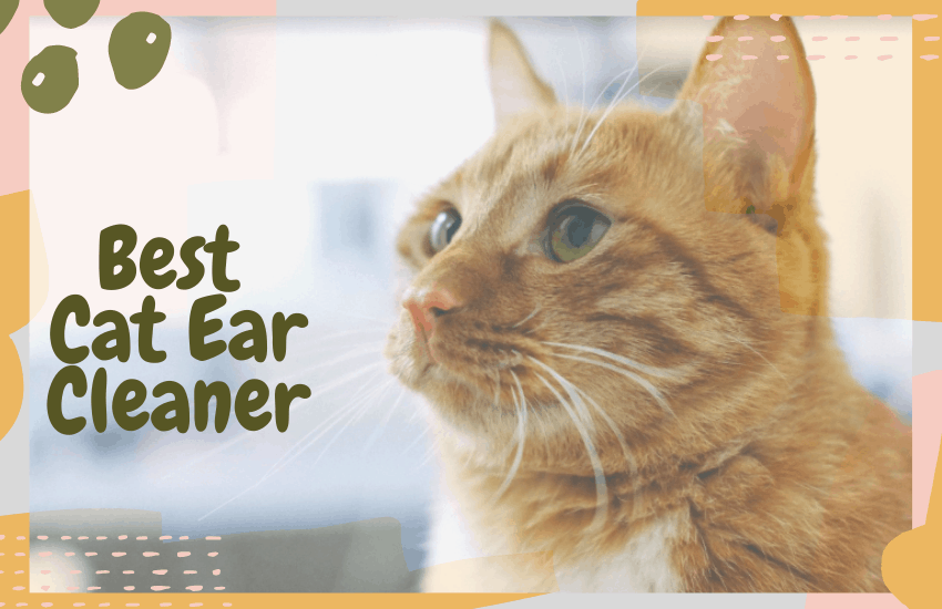 Best Cat Ear Cleaner