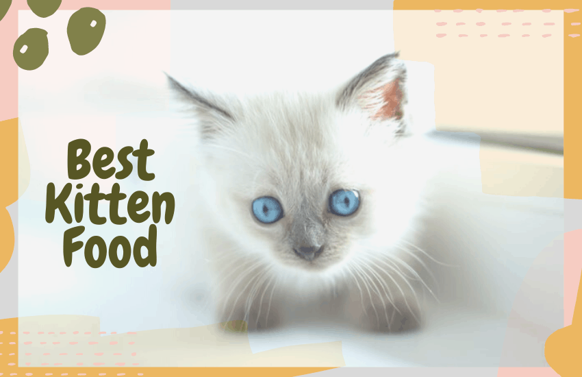 Best Kitten Food