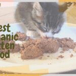 Best Organic Kitten Food