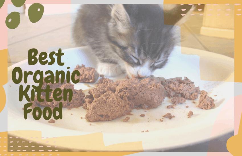 Best Organic Kitten Food