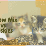 Meow Mix vs Friskies