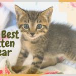 The Best Kitten Gear