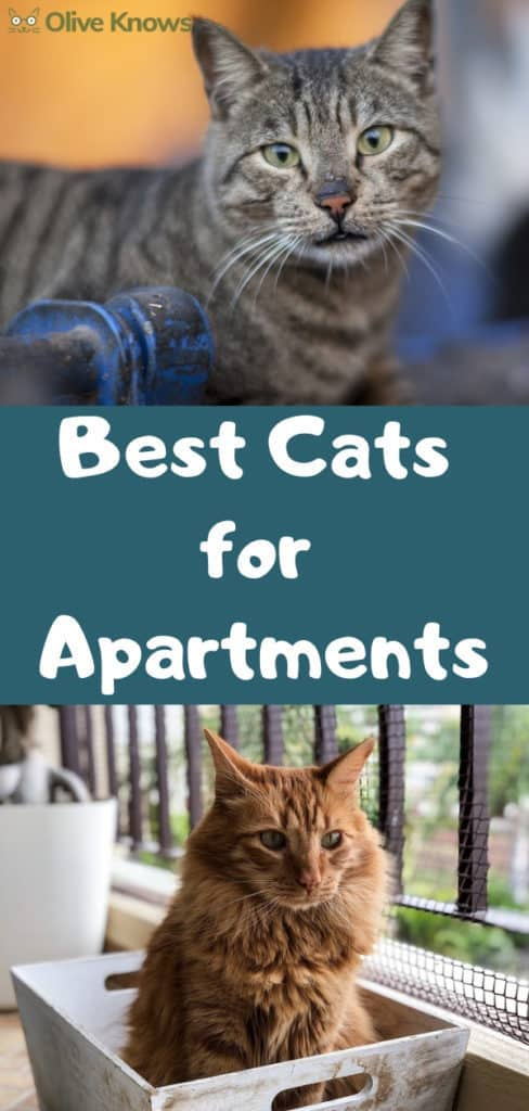 Best-Cats-for-Apartments