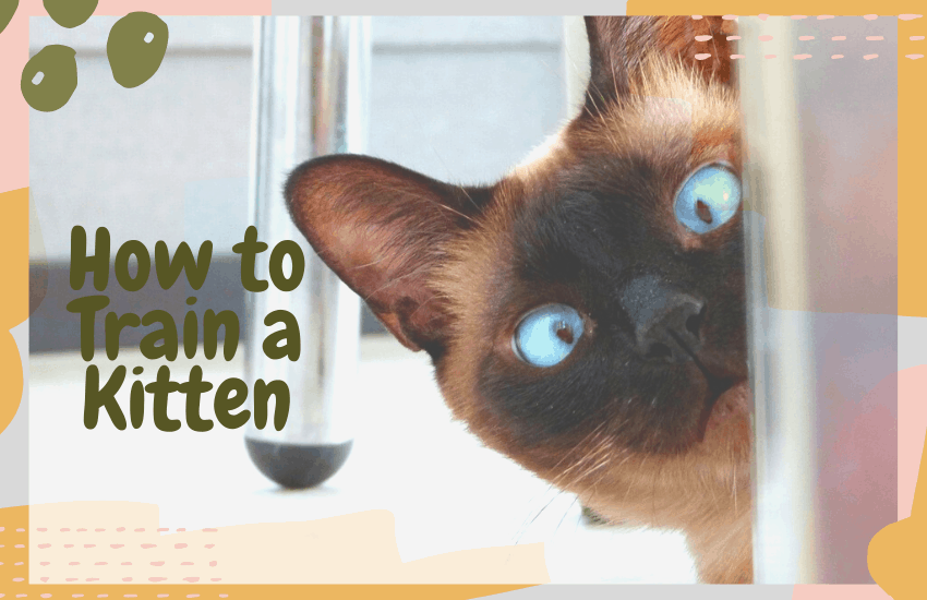 How to Train a Kitten