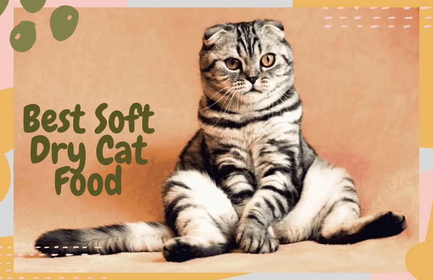 Best Soft Dry Cat Food