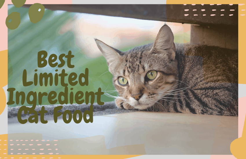 Best Limited Ingredient Cat Food