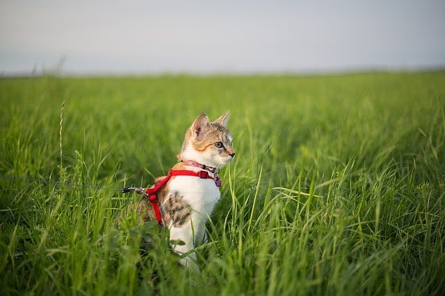 cat-1373903_640.jpg