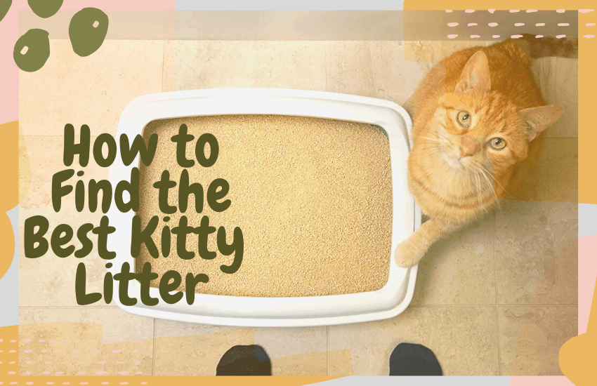 How to Find the Best Kitty Litter