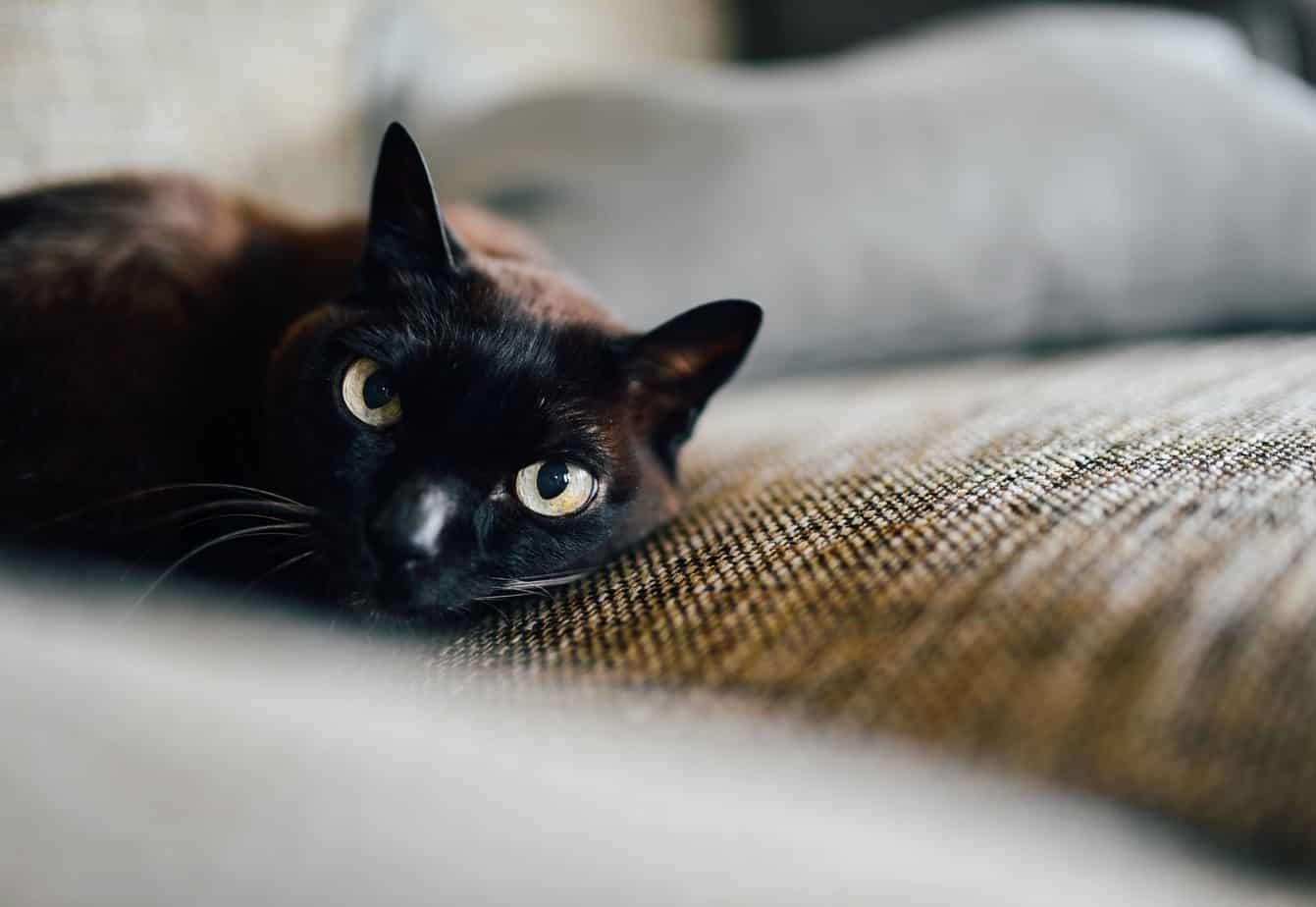 black cat, cat, cat eyes