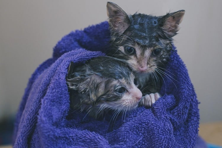 rescued cats