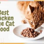 Best Chicken Free Cat Food