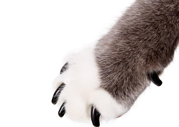 Purrdy Paws Soft Nail Caps