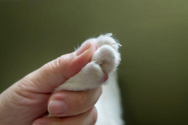 Trim Cat Nails